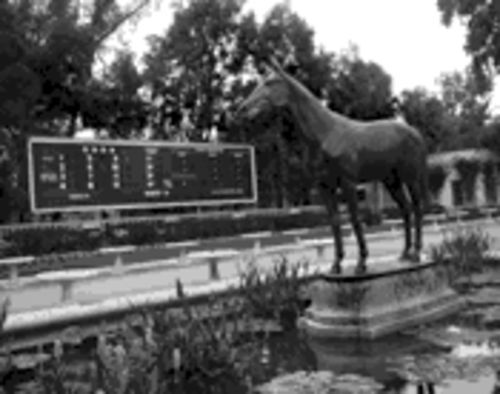 A great horse, of course: Citation still stands tall in Hialeah Park lore