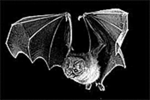 Bats: You gotta love 'em