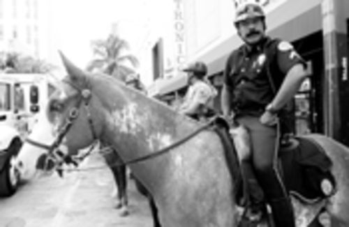 "You canter take it with you -- not if ""it"" is a squad of horses and ""you"" are the Miami police"