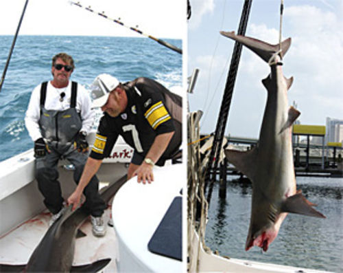 "Fresh kill. ""Mark the Shark"" Quartiano (far left) and a charter fishing client pose with a sandbar shark they reeled in; a sandbar strung up from Quartiano's Striker-1 yacht at the Marriott Biscayne Bay Marina."