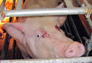 Behind the Scenes of the &amp;quot;Ag-Gag&amp;quot; War