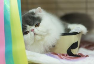Photos: World Cat Congress 2014
