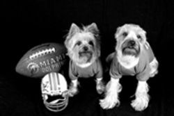 These pups would love a Super Bowl ring