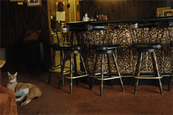 Tikka hangs out next to Ann's leopard-print bar