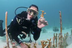 Ken Nedimyer of the Coral Restoration Foundation shows off a piece of coral.