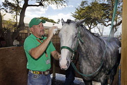 Trainer Jackie Kirby washes a horse before a race.