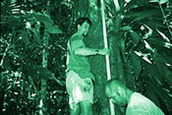 Reillo and Sheets attempt to gauge if termites have invaded the home of two prolifically breeding jaco parrots