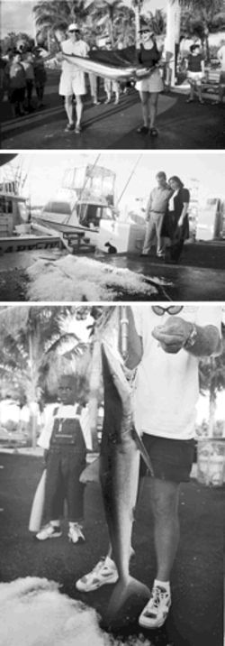 The fascination of fish, dead or alive: At Haulover Park Marina, a couple of anglers pose with their prize sailfish (top),  tourists stare in wonder at billfish on ice at the stern of the Therapy IV (middle), and a youngster warily eyes a small shark  (above)