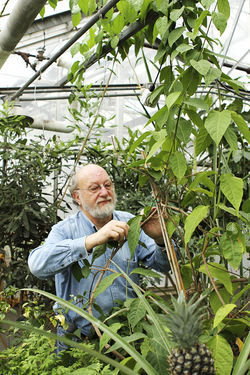 Dennis McKenna has taken ayahuasca hundreds of times