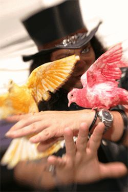 Trixx with two of his birds. He guarantees at least four birds in every show