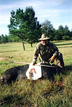 Ray Casais remembers the days when pigs were everywhere in the Glades