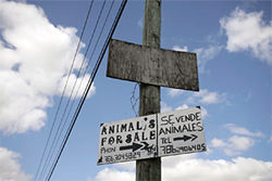 Guess what? Farms with signs like this one don't usually sell the hogs alive.