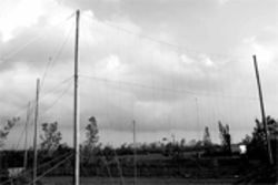 WRMI's southbound antenna is made up of extratall electric  poles connected by a curtain of wires