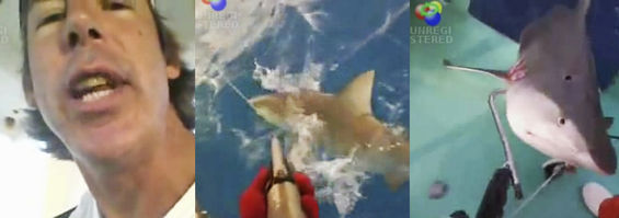 Sharks attack, fishermen and scientists battle