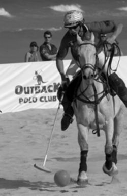 Whoa! Polo ponies are graceful    and swift